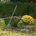 Raking in garden